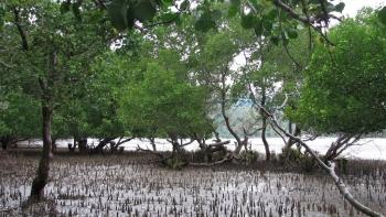 Nước mặn ở Đồng bằng sông Cửu Long lên cao dịp tết Nguyên đán