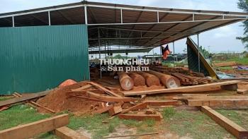 Phường Thạch Quý (TP. Hà Tĩnh): Cần quyết liệt di dời xưởng chế biến gỗ trái phép