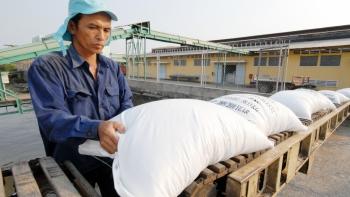 Kim ngạch xuất khẩu gạo năm 2020 tăng hơn 9%