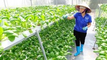 Hà Nội: 12 nhiệm vụ trọng tâm, trọng điểm bảo đảm ATTP trong nông nghiệp