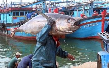 Kỳ vọng xuất khẩu cá ngừ sang EU đạt khoảng 123 triệu USD