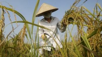 Cả nước có 205 thương nhân đủ điều kiện kinh doanh xuất khẩu gạo