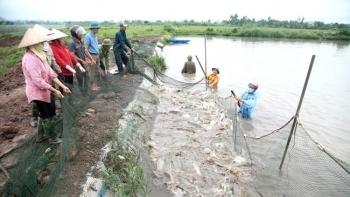 Ninh Bình: Sản lượng thủy sản trong tháng 2 đạt trên 9,7 nghìn tấn