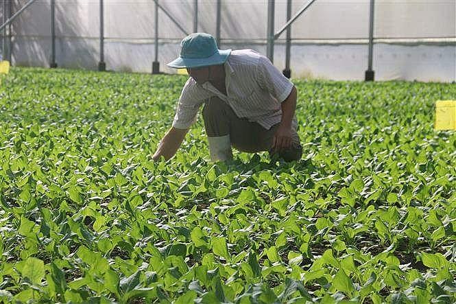Bà Rịa-Vũng Tàu: Có 65 cơ sở sản xuất trồng trọt ứng dụng công nghệ cao
