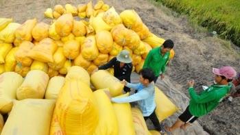 Xuất khẩu gạo sang Philippines đạt 715.717 tấn trong 4 tháng