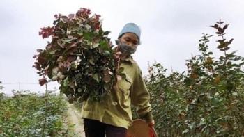 Hà Nội: Phê duyệt Dự án giảm nghèo ở 14 xã ở vùng đồng bào dân tộc miền núi