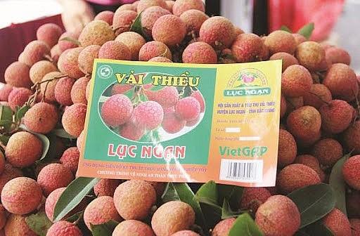 Câu chuyện Sơn Tinh – Thủy Tinh và bài học xây dựng thương hiệu cho nông sản Việt