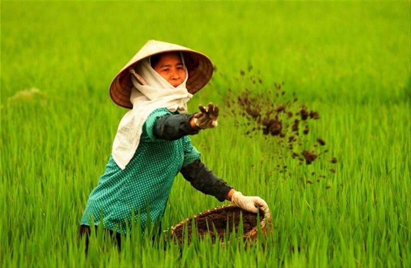 Tăng cường hữu cơ cho đất một cách hiệu quả