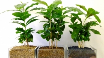 Những loại cây xanh giúp thanh lọc không khí trong nhà
