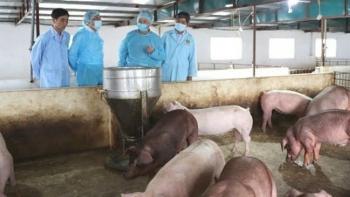 Hà Nội sẽ cơ cấu lại chăn nuôi theo vùng