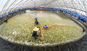 Phú Yên muốn có khu nuôi tôm công nghệ cao