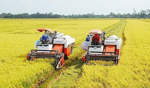 Người nông dân thu lợi lớn từ lúa Thu Đông