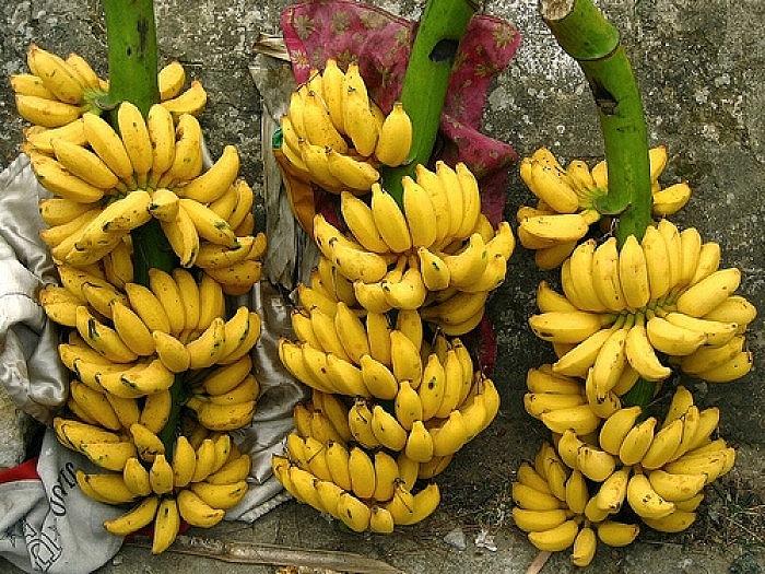 Hưng Yên hướng tới sản xuất nông nghiệp hàng hóa quy mô lớn
