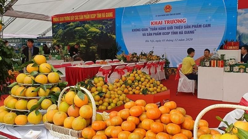 Kết nối cung - cầu, giới thiệu sản phẩm cam Hà Giang tại Quảng Ninh