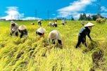 Đề xuất miễn thuế đất nông nghiệp: Đúng đắn, hợp thời cuộc