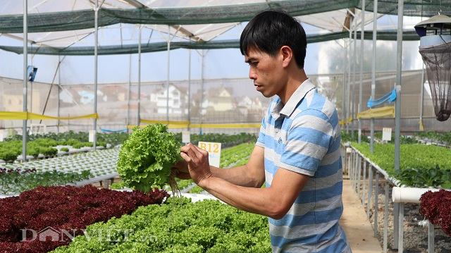 Anh Đức đã từ bỏ công việc nhà nước để theo đuổi đam mê làm nông nghiệp.
