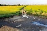 ĐBSCL: Chuyển đổi 50.000 ha đất trồng lúa sang loại cây trồng phù hợp