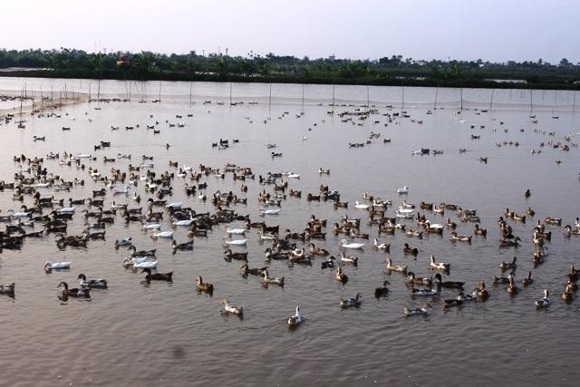 Nếu bảo hiểm nông nghiệp được thực hiện rộng rãi sẽ có hiệu quả tốt với nền nông nghiệp trong nước