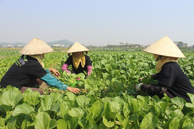 Để giải bài toán bảo hiểm nông nghiệp cần phải có những giải pháp  xây dựng cơ chế riêng