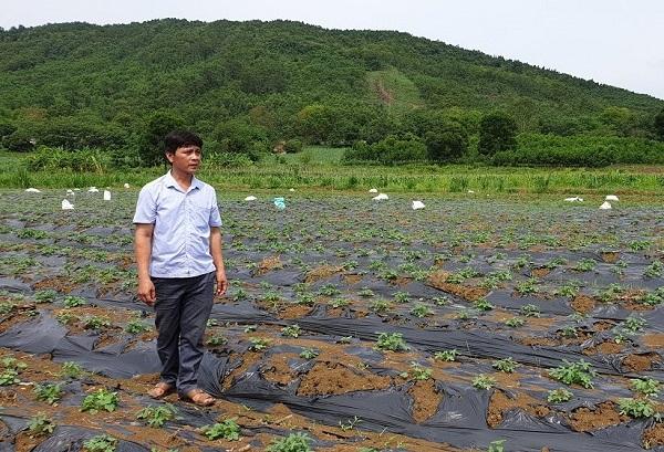 Nhiều giải pháp đầu tư góp phần đưa cây sâm Báo trở thành là niềm tự hào của người dân Thanh Hóa