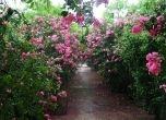 Những địa điểm check-in sống ảo tại Hà Nội: Vườn cổ tích mang tên hoa Tường vi