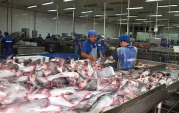 Thắt chặt kiểm tra dư lượng kháng sinh của cá tra sang Hoa Kỳ