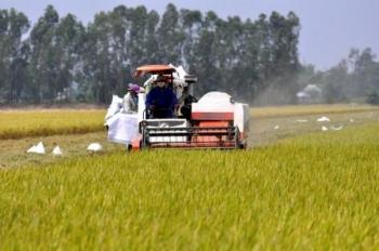 Cà Mau: Phát triển nông nghiệp bền vững thích ứng với biến đổi khí hậu